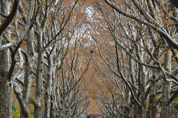 Last big of Fall foliage