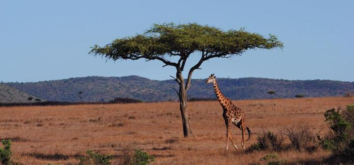 Photo courtesy Fairmont Mara Safari Club website.