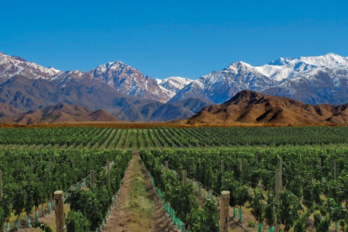 A vineyard in Mendoza - photo courtesy Mendoza Travel.